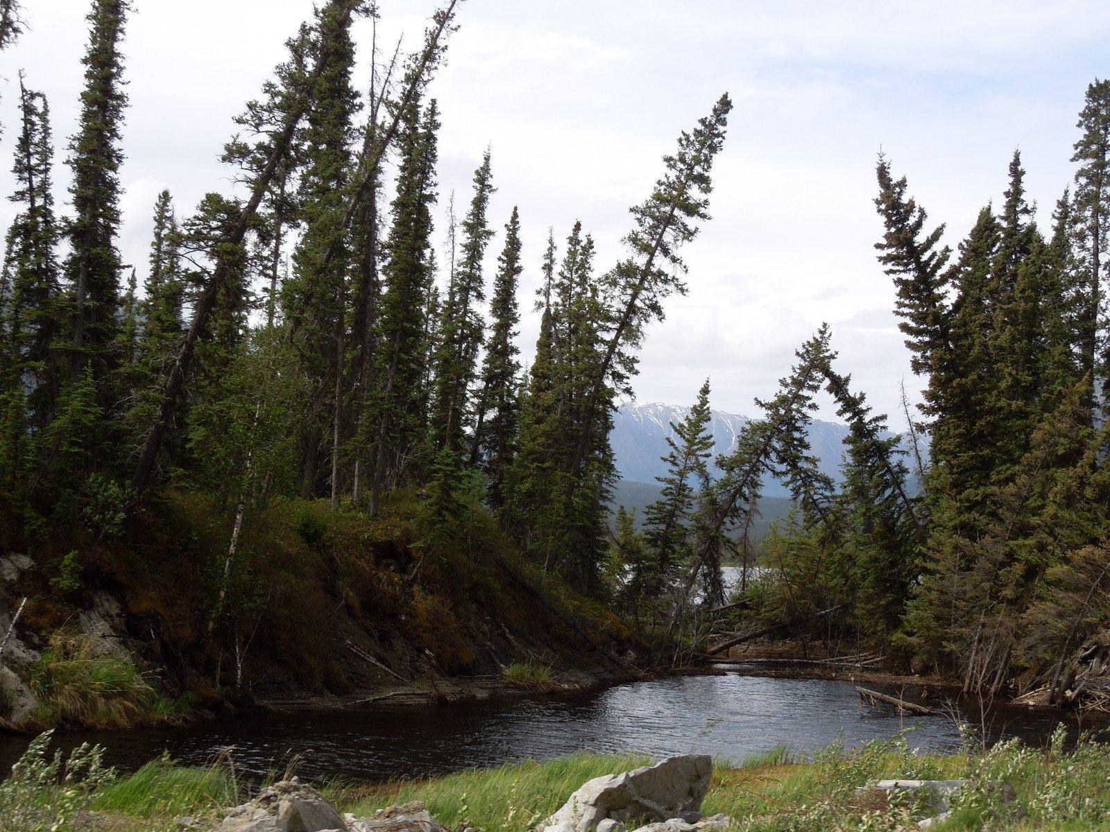 Click image for larger version  Name:Destruction Bay, YK to Tok, Alaska 008.jpg Views:66 Size:503.6 KB ID:215273
