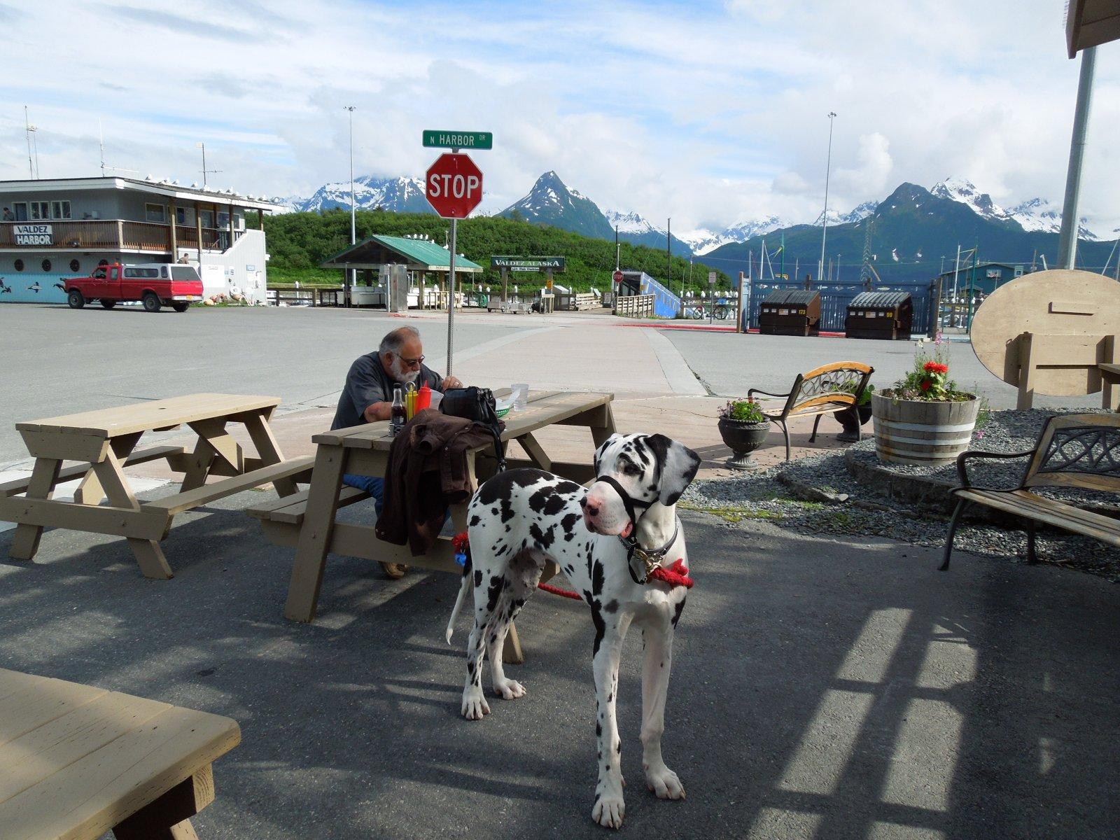 Click image for larger version  Name:Valdez to Copper River Center 081.jpg Views:62 Size:362.5 KB ID:215360