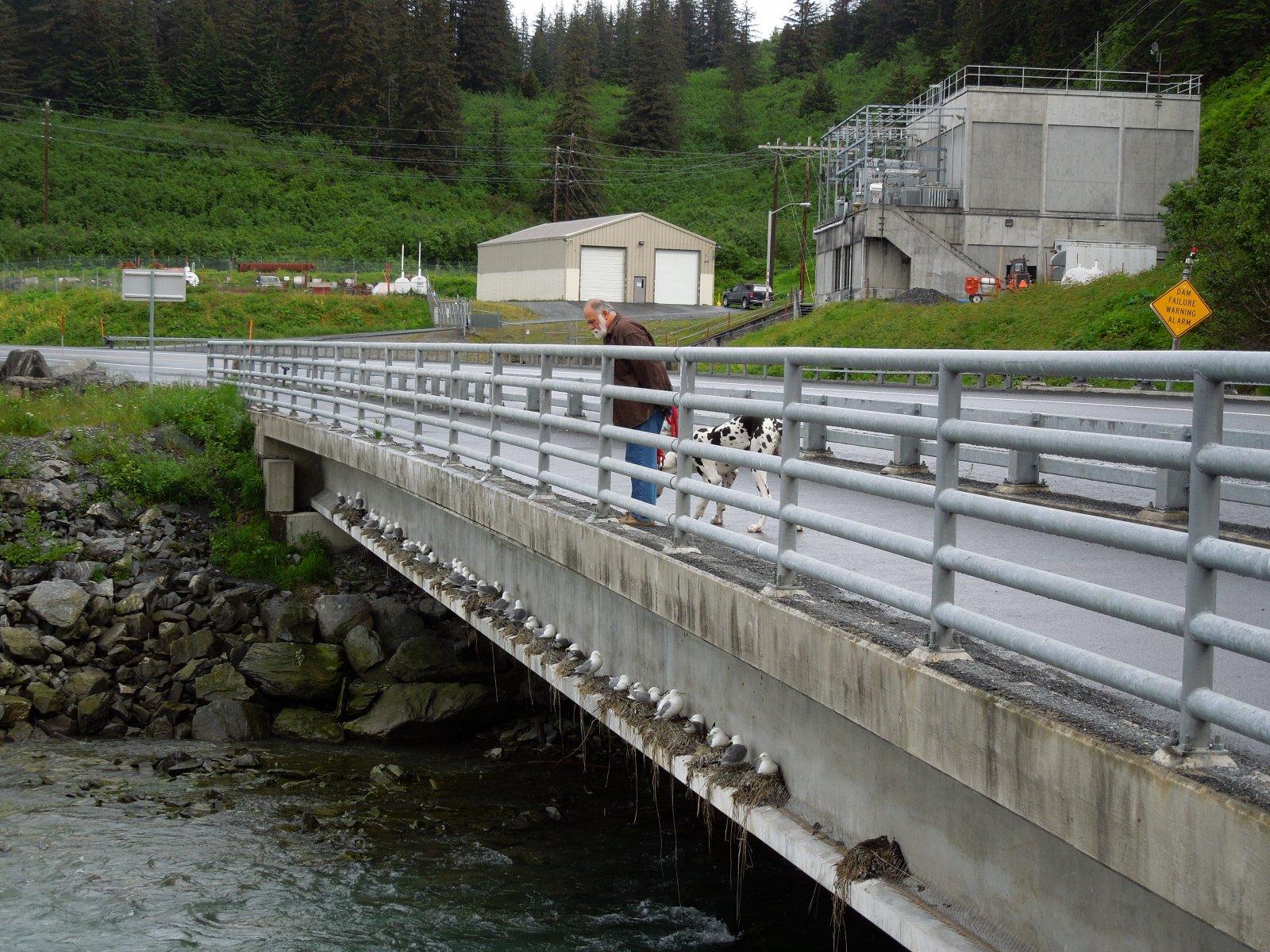 Click image for larger version  Name:Valdez to Copper River Center 063.jpg Views:58 Size:490.4 KB ID:215367