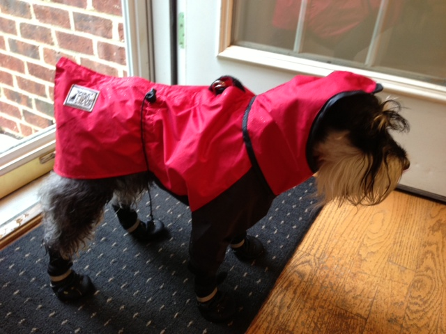 Click image for larger version  Name:Winston Ready For Rainy Weather.JPG Views:74 Size:123.1 KB ID:218931
