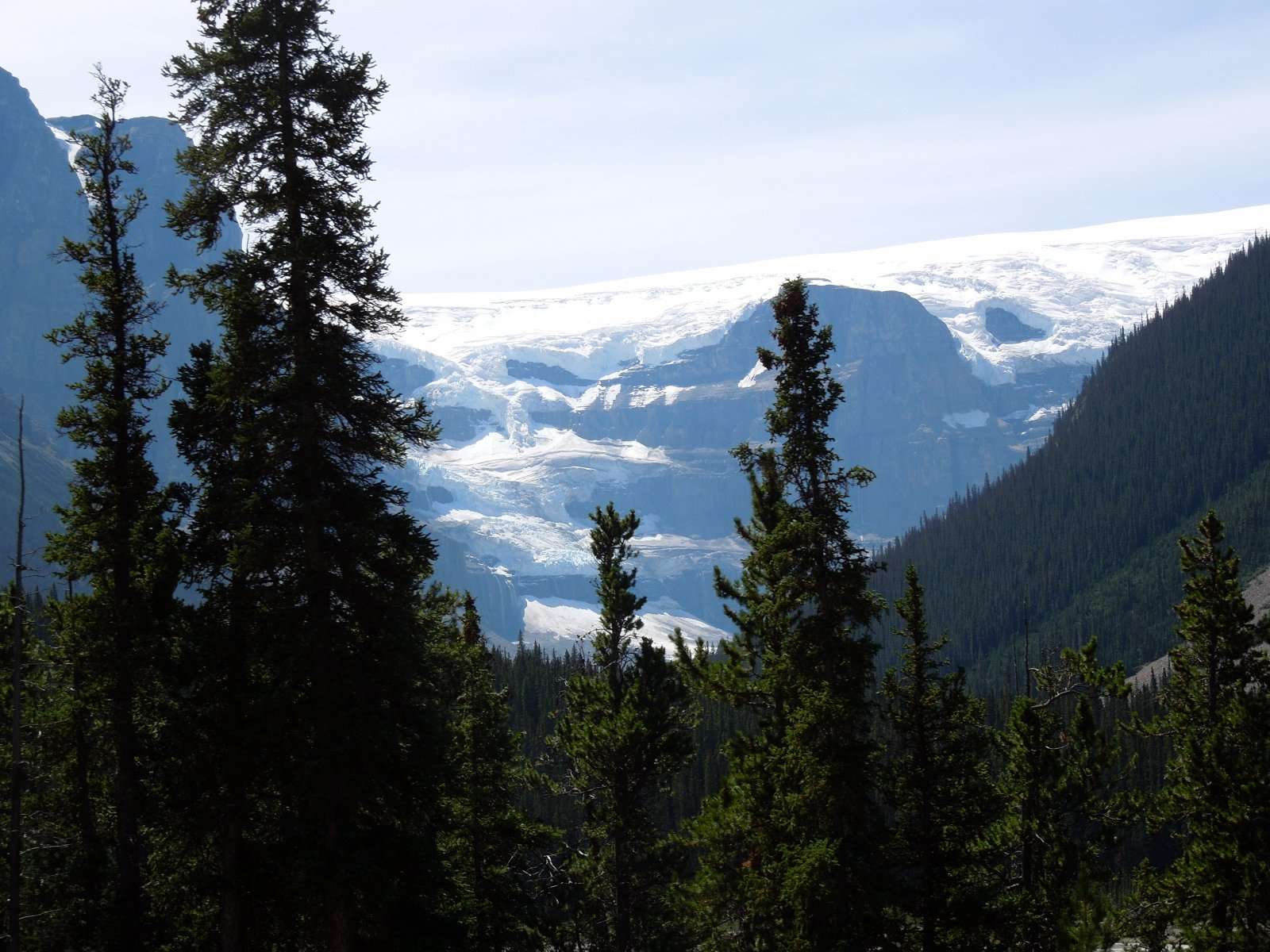 Click image for larger version  Name:Dawson Creek to Icefield Parkway to Cochrane 228.jpg Views:47 Size:365.4 KB ID:222448