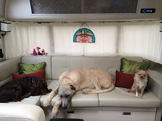 Click image for larger version  Name:3dogcouch.jpg Views:271 Size:505.0 KB ID:227401