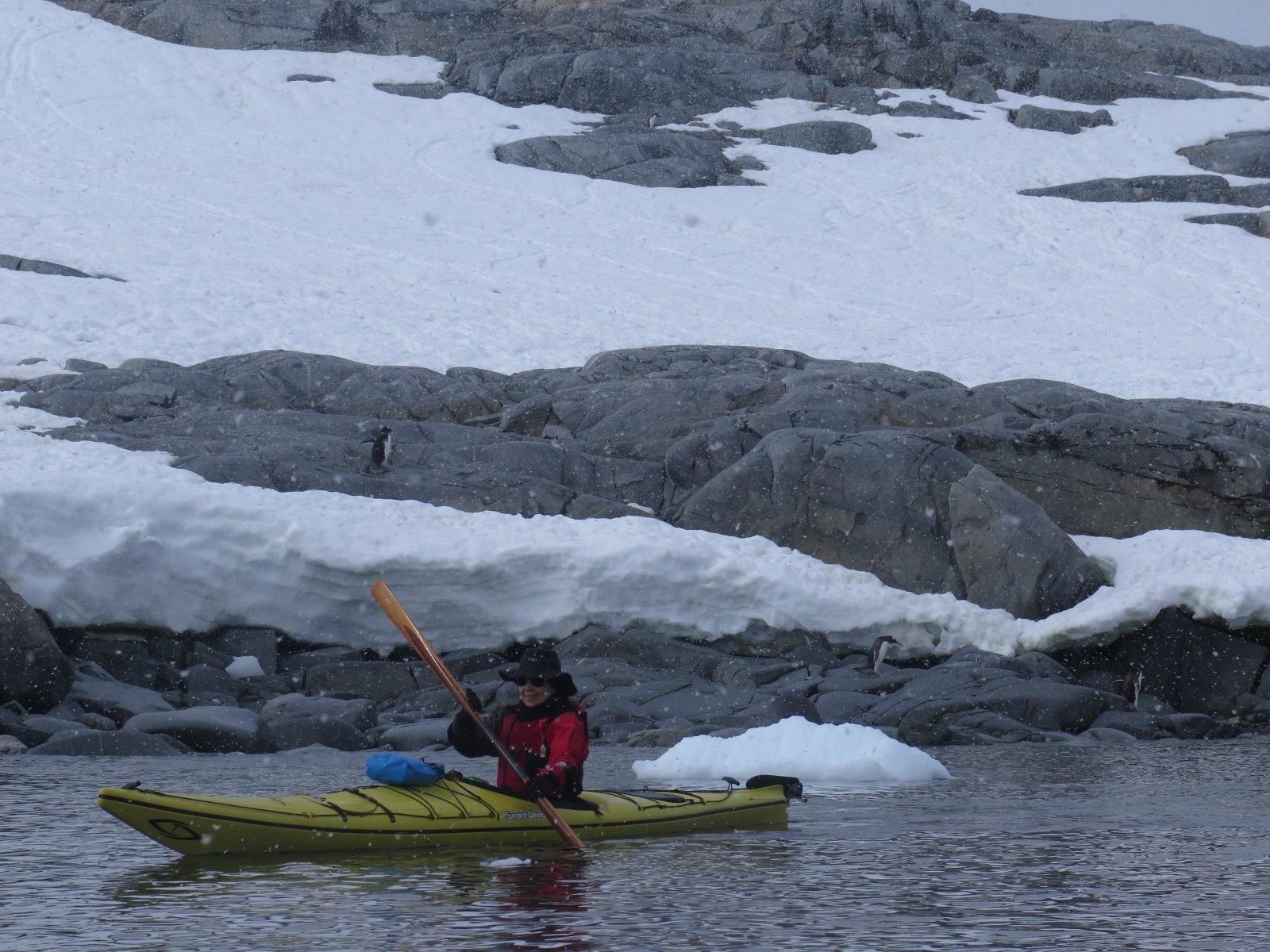 Click image for larger version  Name:Snowing & Gentoo Penguins.jpg Views:156 Size:358.7 KB ID:231277