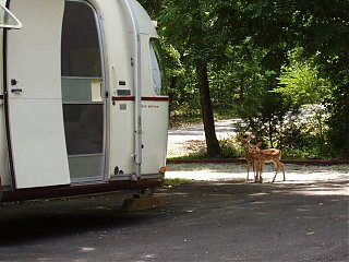 Click image for larger version  Name:Whitetail Fawns 012.jpg Views:2245 Size:72.6 KB ID:23688