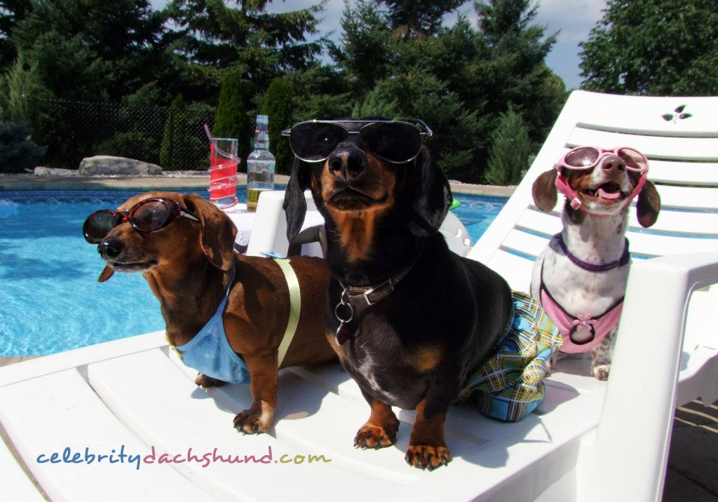 Click image for larger version  Name:sexy-ladies-wiener-dog-pool-party-1024x716.jpg Views:65 Size:141.2 KB ID:237363