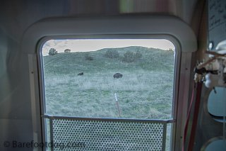 Click image for larger version  Name:airstream_bison.jpg Views:177 Size:420.0 KB ID:239266