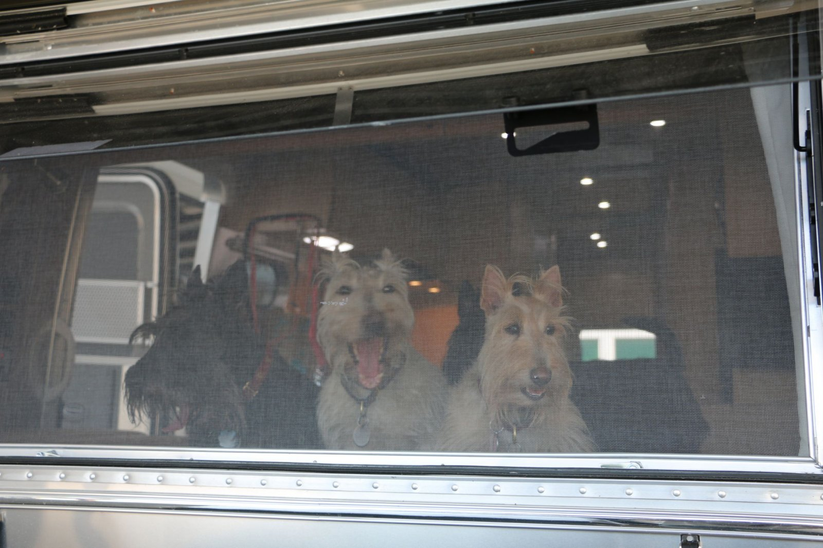Click image for larger version  Name:PupsinAirstream.jpg Views:35 Size:264.4 KB ID:239987