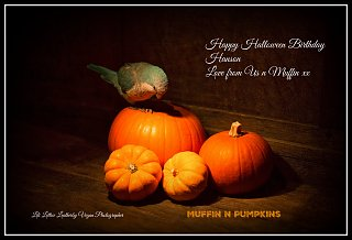 Click image for larger version  Name:1007540 CARD Muffin n Pumpkin 3.jpg Views:71 Size:221.1 KB ID:251410
