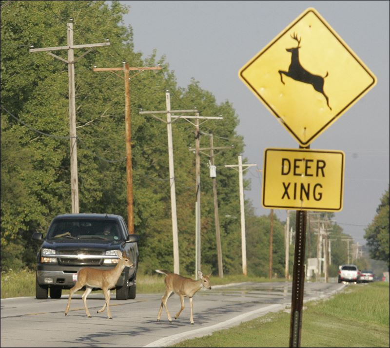 Click image for larger version  Name:Deer-crossing-field.jpg Views:60 Size:97.4 KB ID:253669