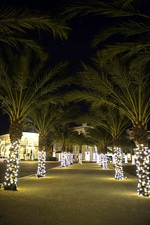 Click image for larger version  Name:Lighted Palms-2-s.jpg Views:54 Size:312.1 KB ID:254325