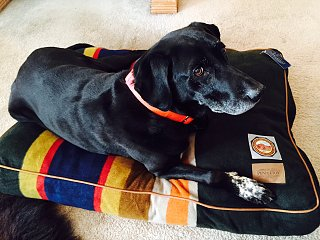 Click image for larger version  Name:Dog Bed.jpg Views:90 Size:449.1 KB ID:259642