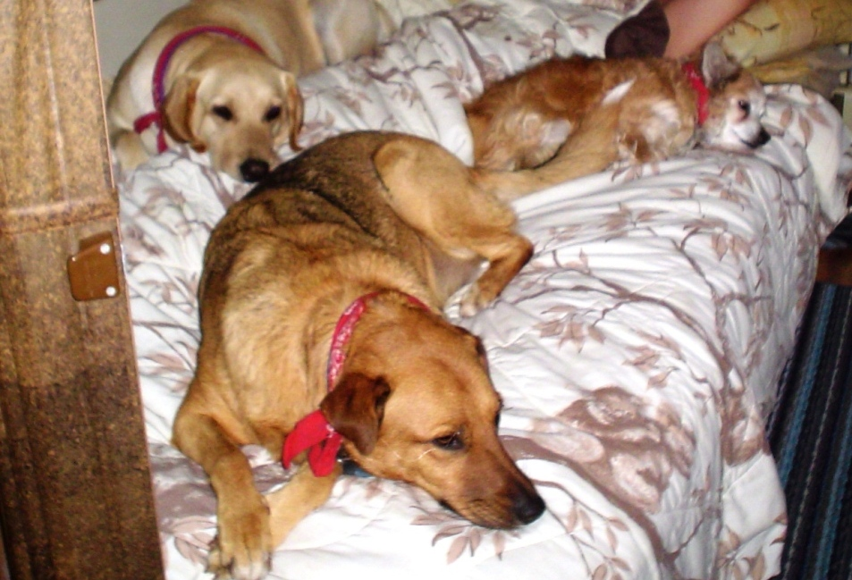 Click image for larger version  Name:dogbed.JPG Views:96 Size:268.9 KB ID:25966
