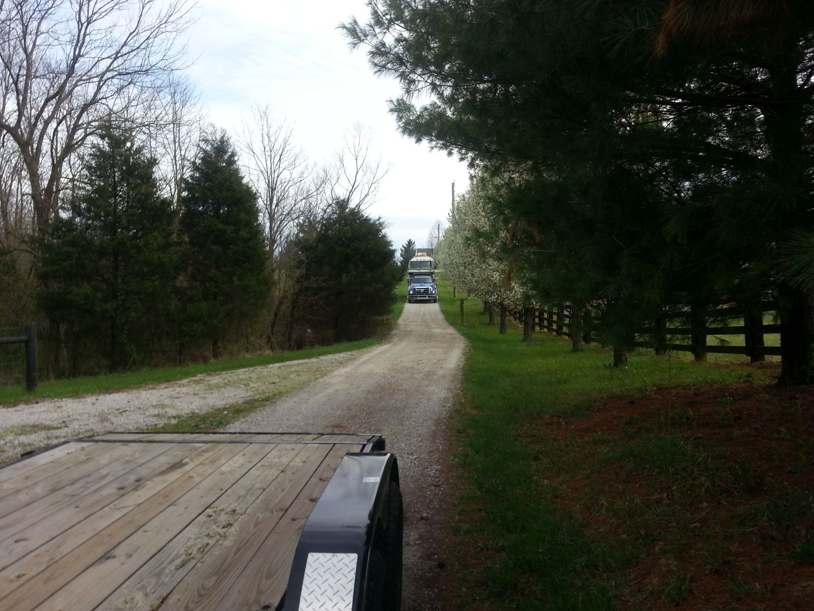 Click image for larger version  Name:peanut-coming-down-the-driveway.jpg Views:120 Size:312.4 KB ID:259770