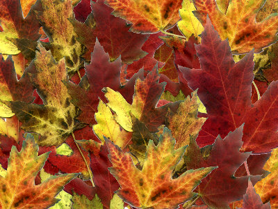Click image for larger version  Name:fall foliage 1.jpg Views:72 Size:68.5 KB ID:26553