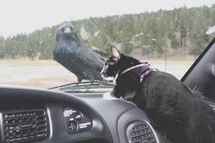 Click image for larger version  Name:Athena & Raven.jpg Views:82 Size:39.2 KB ID:27078