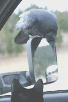 Click image for larger version  Name:Raven & Mirror.jpg Views:89 Size:29.5 KB ID:27079