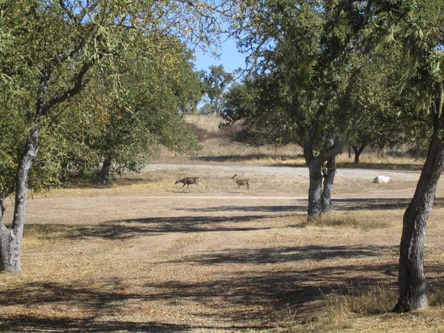 Click image for larger version  Name:deer lsa 1.jpg Views:52 Size:116.9 KB ID:27328