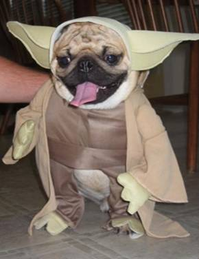 Click image for larger version  Name:yoda.jpg Views:62 Size:14.8 KB ID:27719