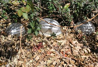Click image for larger version  Name:Baby Wee Winds in woods.jpg Views:85 Size:261.0 KB ID:28636