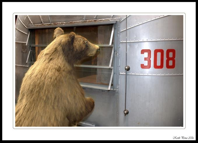 Click image for larger version  Name:bear.jpg Views:91 Size:41.7 KB ID:28709