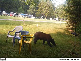 Click image for larger version  Name:bear at rally.jpg Views:167 Size:547.6 KB ID:287845