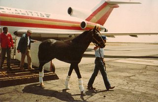 Click image for larger version  Name:Sunday Silence 1989 winner Kentucky Derby (2).jpg Views:63 Size:120.8 KB ID:293878