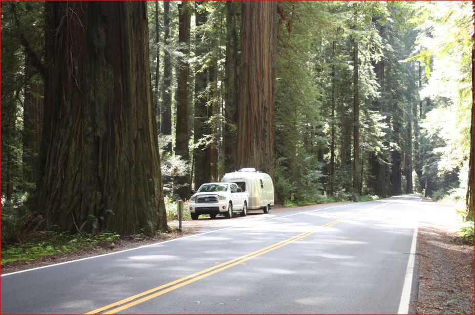 Click image for larger version  Name:2005 Bambi and 2008 Tundra_Avenue of the Giants_Across the road.JPG Views:273 Size:131.9 KB ID:294219