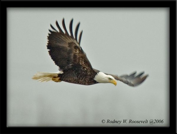 Click image for larger version  Name:Eagle 2.jpg Views:94 Size:178.7 KB ID:29854