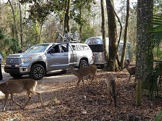 Click image for larger version  Name:deer.jpg Views:104 Size:643.1 KB ID:304676