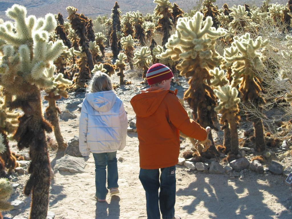Click image for larger version  Name:Cholla cacti garden.JPG Views:56 Size:174.6 KB ID:30876
