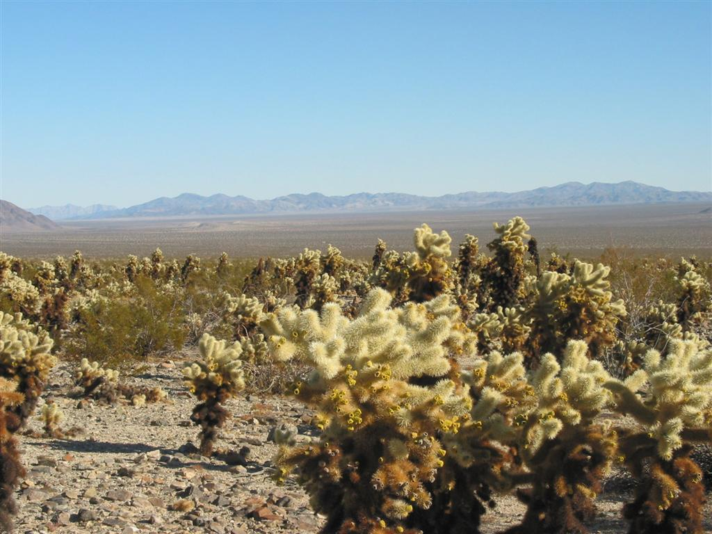 Click image for larger version  Name:Joshua Tree.JPG Views:51 Size:131.9 KB ID:30877