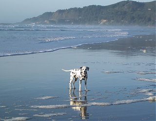 Click image for larger version  Name:beverly beach.jpg Views:80 Size:215.6 KB ID:31016