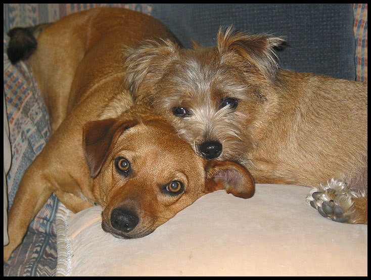 Click image for larger version  Name:Annie and Lucy #1 .jpg Views:67 Size:158.4 KB ID:31377