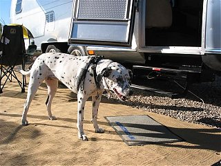 Click image for larger version  Name:airstreamrug.jpg Views:102 Size:80.3 KB ID:32266
