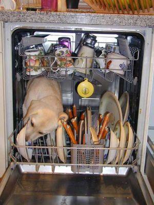 Click image for larger version  Name:dishwasher.jpg Views:90 Size:30.9 KB ID:32443