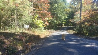 Click image for larger version  Name:WalkingDogs-AutumnLook.jpg Views:48 Size:287.3 KB ID:325869