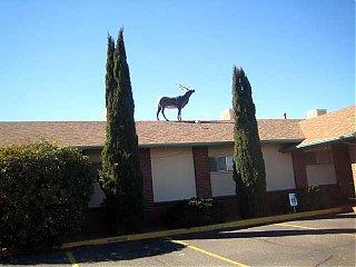 Click image for larger version  Name:elk on roof 01.jpg Views:72 Size:42.8 KB ID:32913