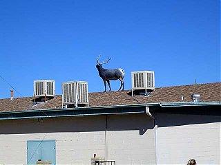 Click image for larger version  Name:elk on roof 02.jpg Views:73 Size:40.6 KB ID:32914