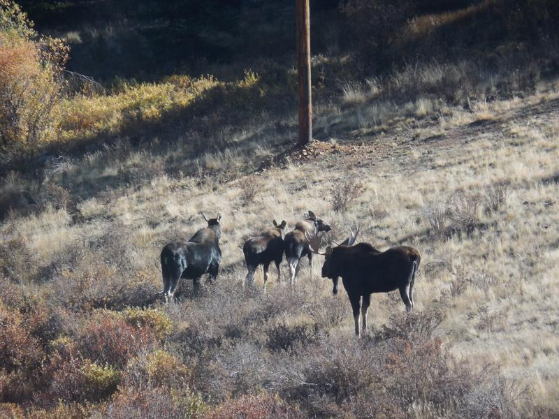 Click image for larger version  Name:1809 Moose Family 1-800x600.JPG Views:91 Size:162.0 KB ID:330352