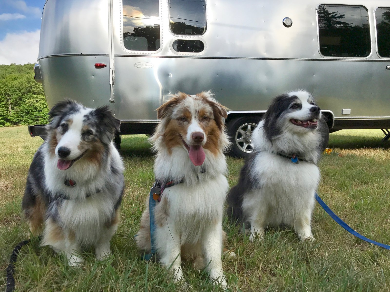 Click image for larger version  Name:Pups  airstream.jpg Views:77 Size:415.9 KB ID:331629