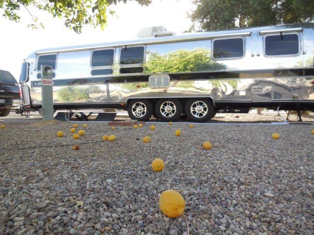 Click image for larger version  Name:1804 Tucson Lemons (Small).JPG Views:35 Size:185.4 KB ID:334129