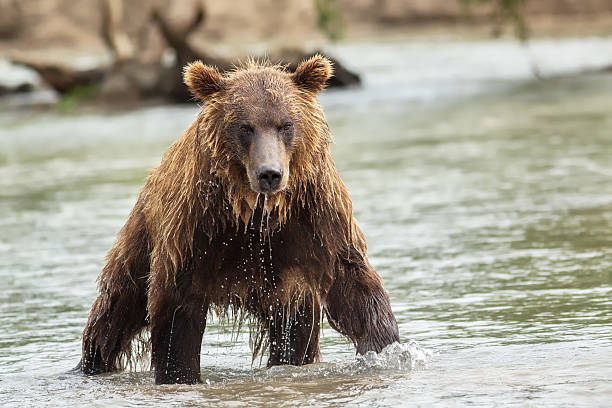 Click image for larger version  Name:wet bear.jpg Views:17 Size:51.0 KB ID:337108