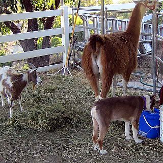 Click image for larger version  Name:hooved beasts and blaze 2.jpg Views:71 Size:116.7 KB ID:33989