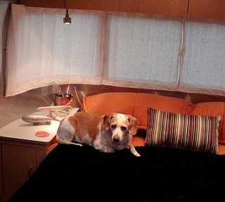 Click image for larger version  Name:BEAGLE IN AIRSTREAM.jpg Views:12 Size:40.9 KB ID:345774