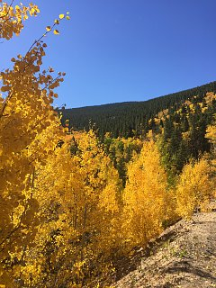 Click image for larger version  Name:Aspens.jpg Views:39 Size:524.7 KB ID:353772