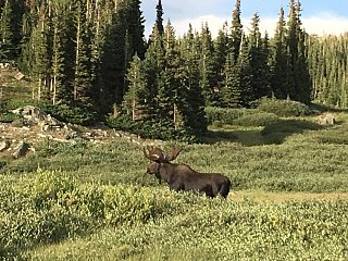 Click image for larger version  Name:Moose1.JPG Views:51 Size:189.5 KB ID:355063