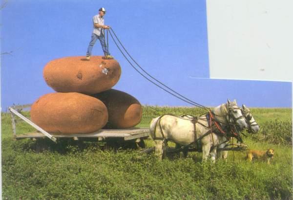 Click image for larger version  Name:potato harvest2.jpg Views:192 Size:30.7 KB ID:358