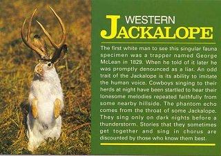 Click image for larger version  Name:jackalope.jpg Views:226 Size:48.7 KB ID:359