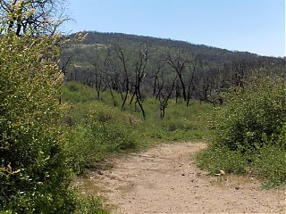 Click image for larger version  Name:HPIM0672 Cedar Trail 4.jpg Views:131 Size:112.4 KB ID:36538