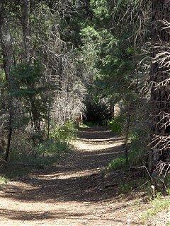 Click image for larger version  Name:HPIM0674 Mule Deer2.jpg Views:202 Size:151.5 KB ID:36539